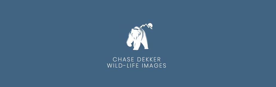 作品に特化したロゴ