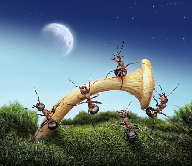 Макрофотография муравьев