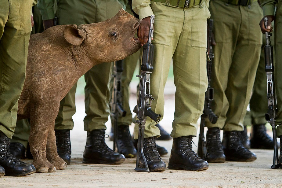 baby rhino and soldiers by wix photographer Hilary O'Leary