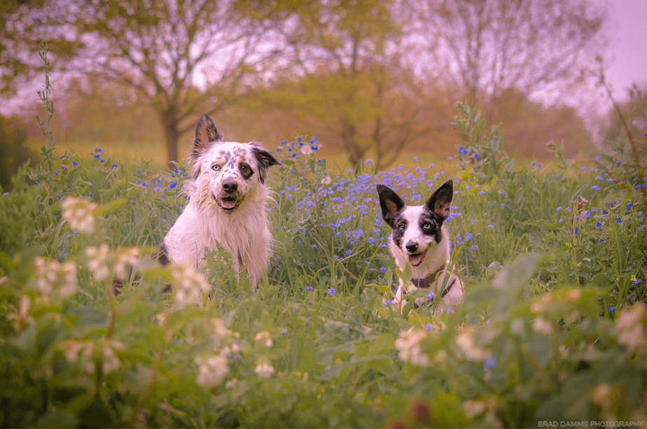 Fotografía de Mascotas Wix por Brad Damms Photography