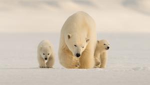 La vie sauvage ! L'interview du célèbre photographe animalier Roie Galitz