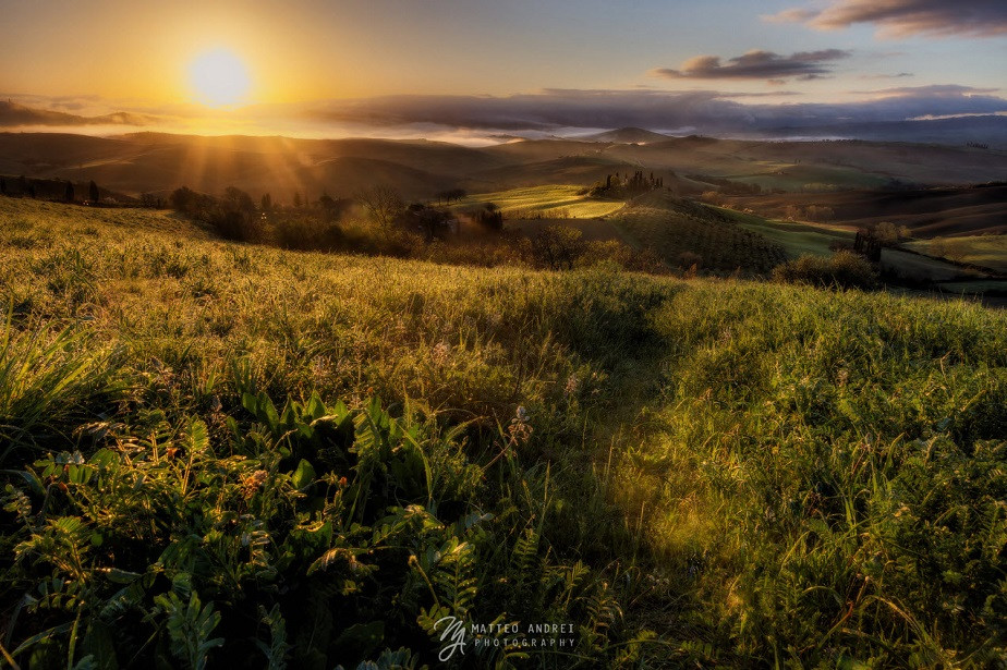 beautiful nature photography of a field in the sun landscape by wix photographer matteo andrei