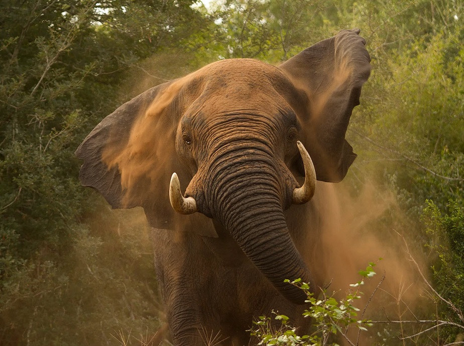 Elephant running by wix photographer Hilary O'Leary