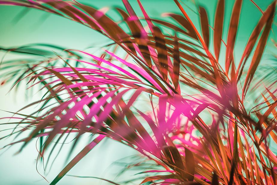 Fotografía de hojas neón de  Brigitte Stanford