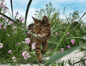 Fotografía de Mascotas Wix por Ramona Bach 2