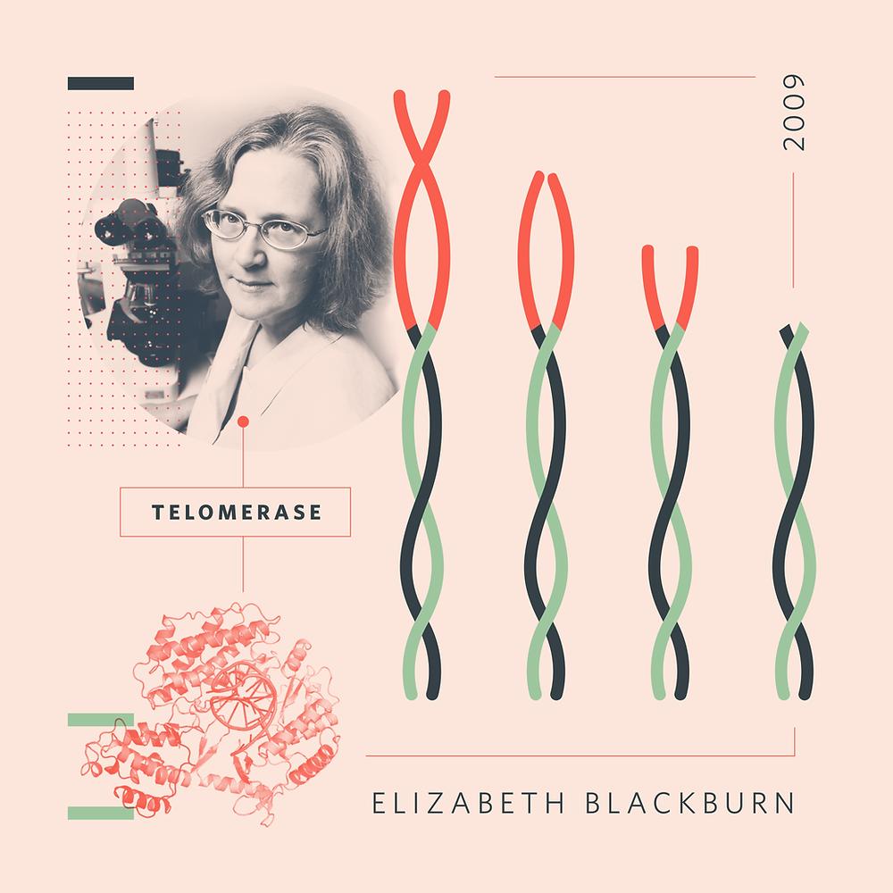 Elizabeth Blackburn by Amanda Phingbodhipakkiya