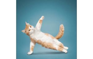 Fotografía de Mascotas Wix por Yoga Dogs
