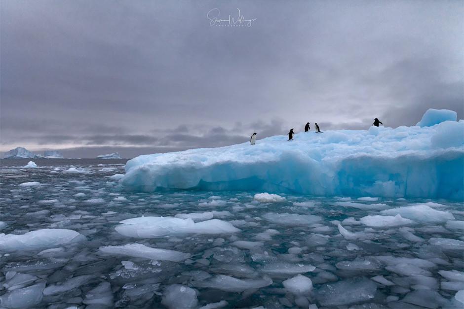 Foto de pingüinos en el ártico
