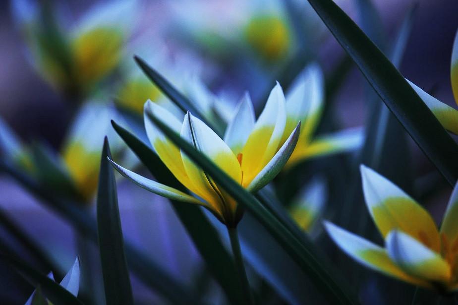 beautiful macro photo of flowers by wix photographer meg farrar