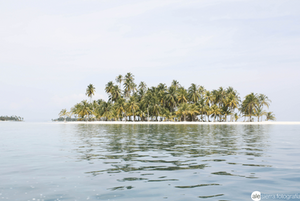 deserted island with palm trees seen from the sea water