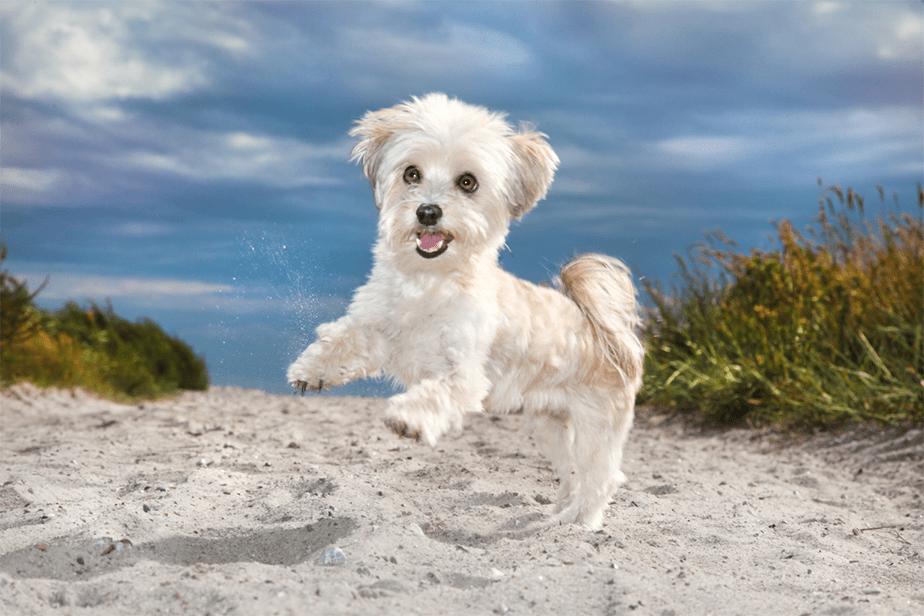 Fotografía de Mascotas Wix por Ramona Bach