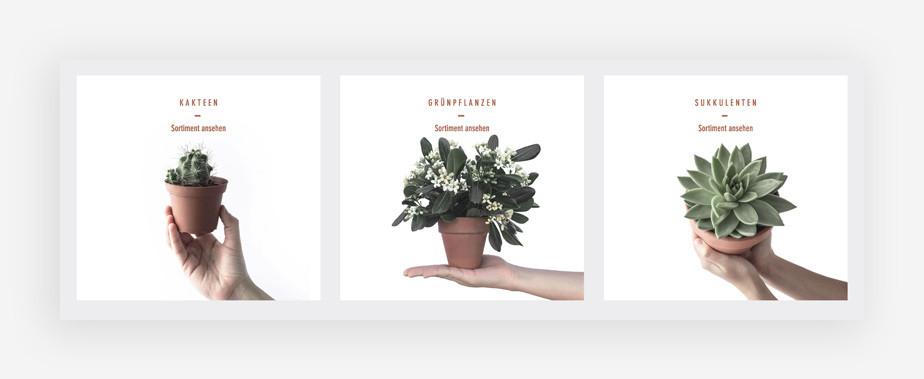 Screenshoot der Produktbilder mit Pflanzen eines eCommerce Templates