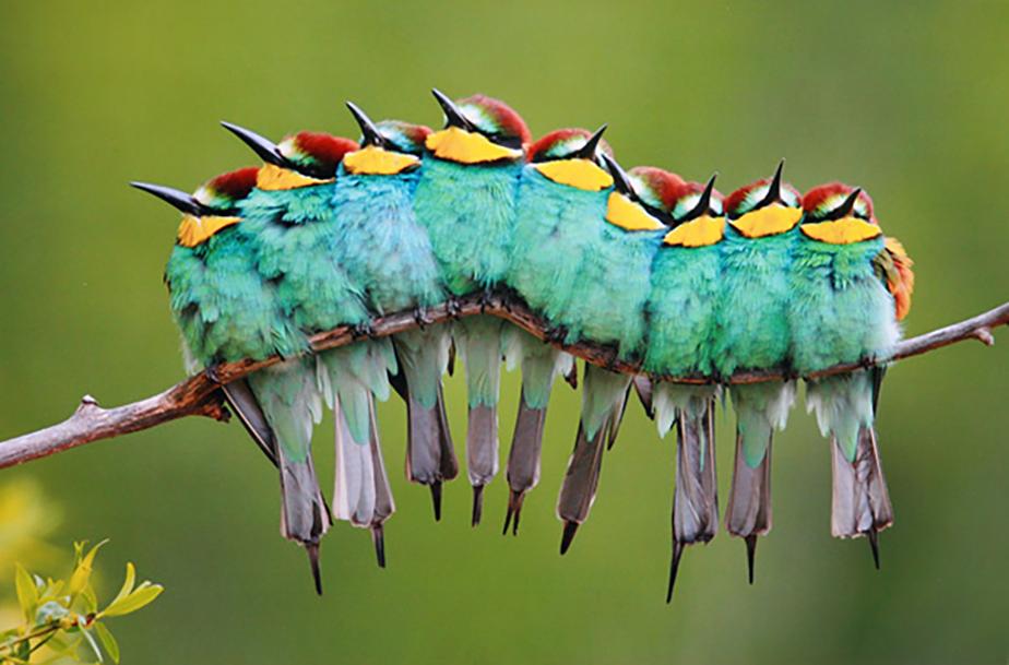 Des oiseaux sur une branche