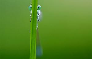 Un insecte derrière un brin d'herbe