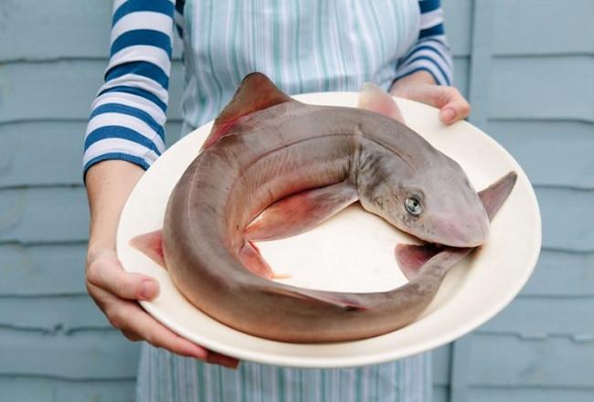 requin sur une assiette