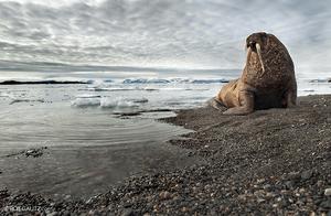 Sea lion by roie galitz