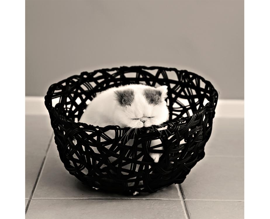 Fotografía de Mascotas Wix por Crea8ive Photography