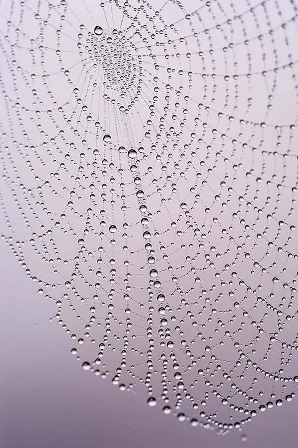 macro photo of water drops on spider web