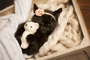 Kitty Lee's New Born Kitten Shoot - Kitten and a bear