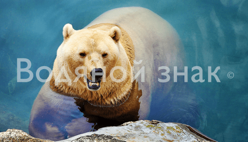 Как защитить фотографии с помощью водяного знака