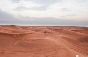 brown sand dunes and three camels