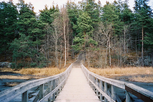 bridge over river leading to forest