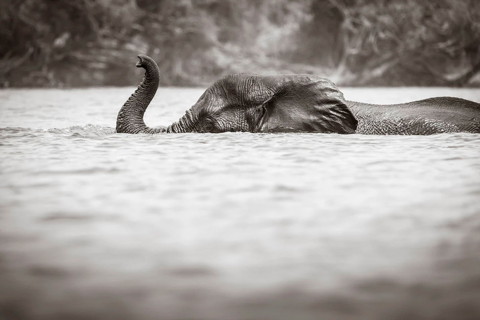 Photographie noir et blanc - Heidi Crundwell