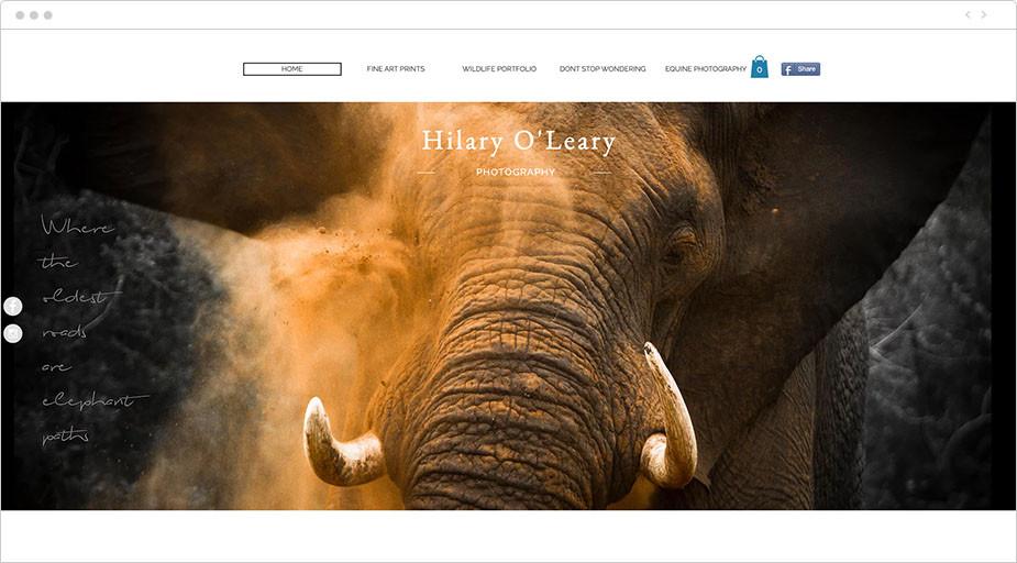 Foto de trompa de elefante de la web de Hilary O'Leary