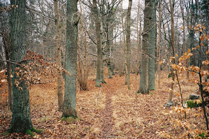 autumn leaves covering forest ground