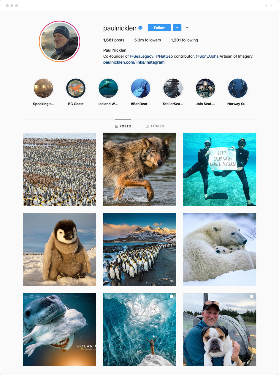 Feed de Instagram de Paul Nicklen