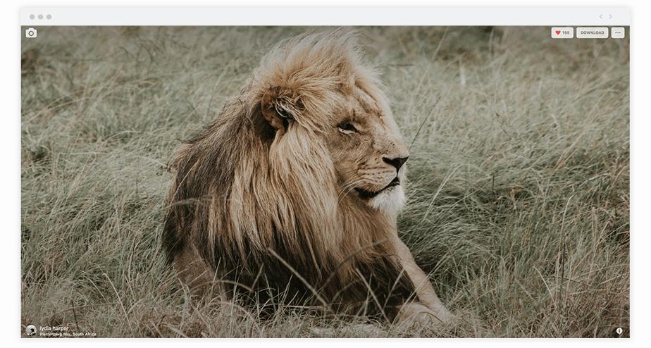 Best Chrome Extensions for Photographers Unsplash