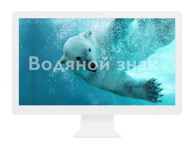 белый мишка под водой водяной знак