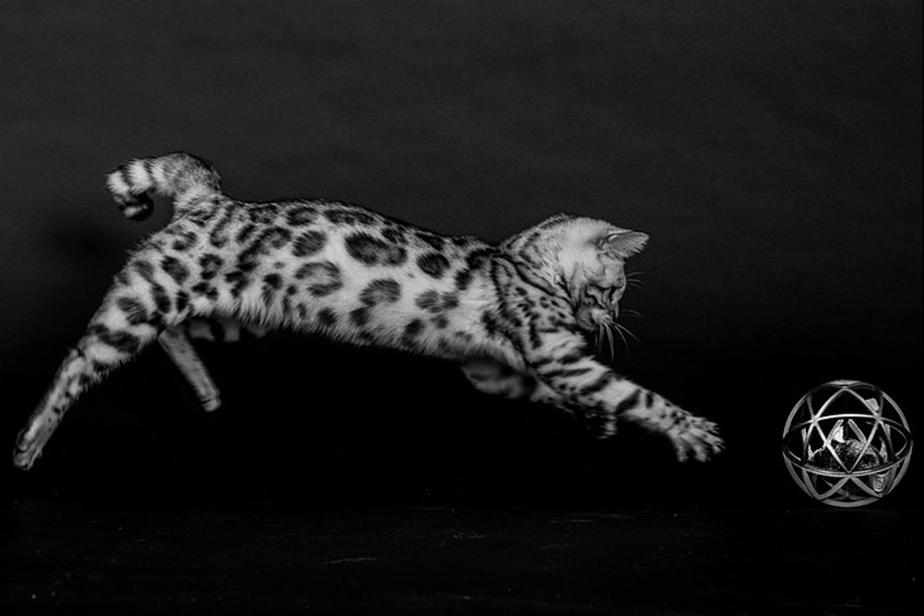 Fotografía de Mascotas Wix por SAAF-Photography 2