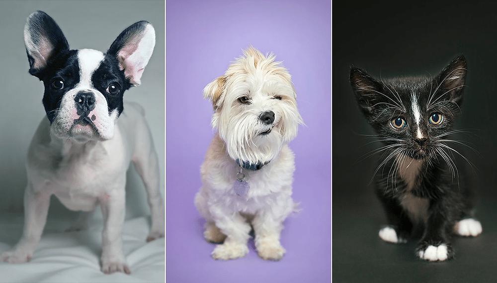 Fotógrafos de mascotas