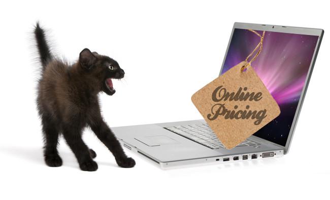 Gatito asustado por los precios en una computadora
