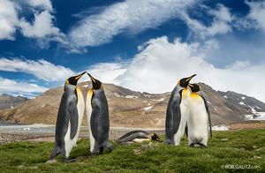 Penguins in Antarctica by Roie Galitz