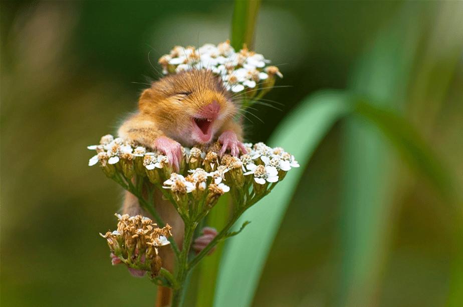 Un hamster dans les fleurs