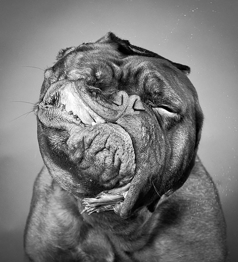 Un chien qui fait une grimace