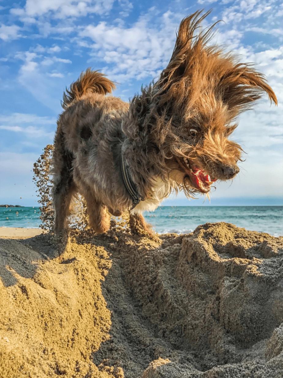 Un chien à la plage