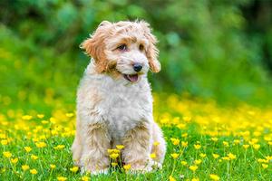 Fotografía de Mascotas Wix por SAAF-Photography