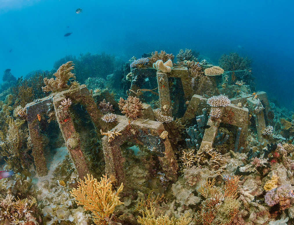 115-sulubaai-SRP-reef-CB.jpeg
