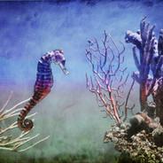Maria Marvosh Seahorse Photograph.jpeg