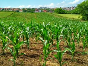 エネルギー農では野菜が「主」、人が「従」です。^_^