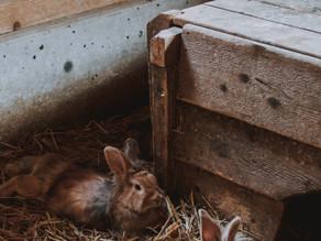 畑でウサギの糞を発見!!しかも、多め。。