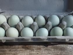 Easter Egger Eggs