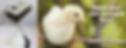 Screen Shot 2020-05-14 at 12.37.56 pm.pn