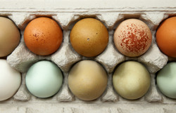 Buying and Selling Fertile Eggs