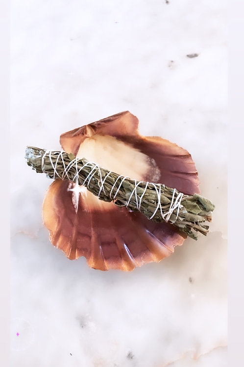 Organic sage + Lion Paw Shell