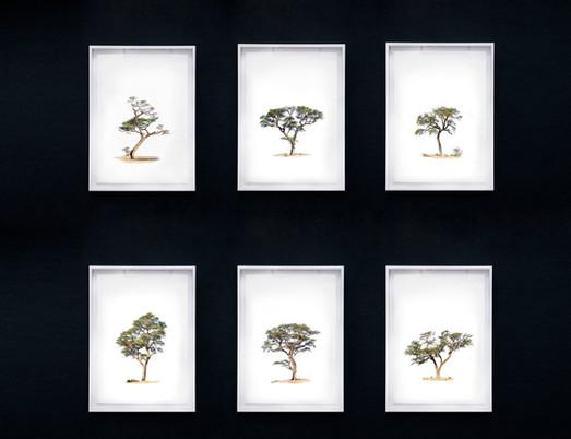 Kameeldoring Collection
