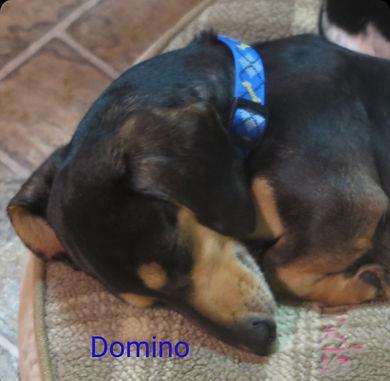 domino_1_edited.jpg